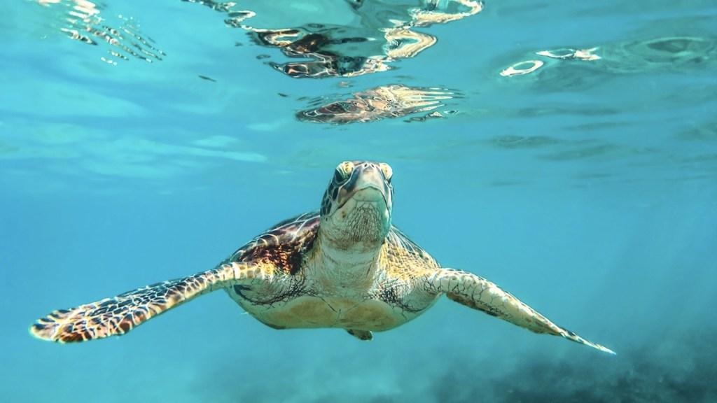 Unesco estudiará cambio climático en especies marinas