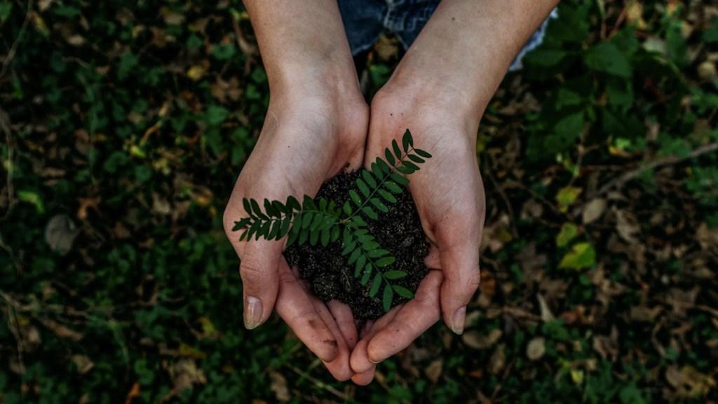 ONU reconoce como un derecho vivir en un medio ambiente limpio