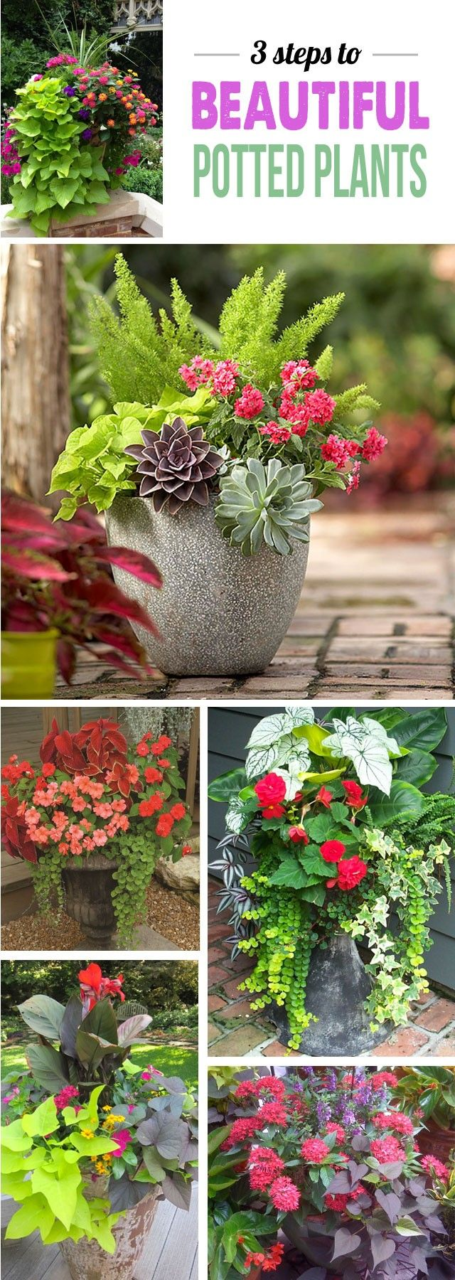 Great tips for making stunning potted plant arrangements – can't wait to add some color to my deck!