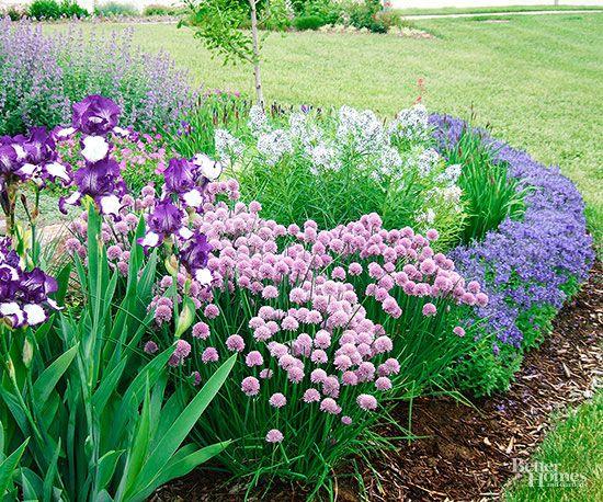 Pretty Purple Pairing: Veronica + Bearded Iris + Feather Bluestar + Catmint + Chives