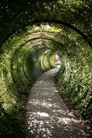 Garden tunnel @ Alnwick Castle. I wonder if a shorter version of this could be made for a regular sized ga