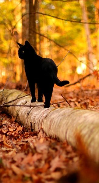 "* * "" I luvs to hunt, except in winter. Tracks a total give-away ands my tail could get frozen and snap of"