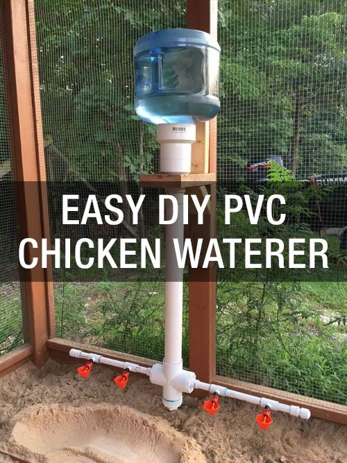 Learn a super easy way to keep your flock watered: www.mychickencoop…