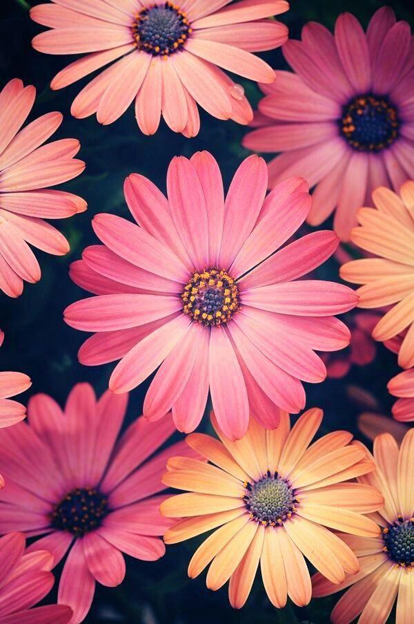 Saiba mais sobre dicas de jardinagem em: www.asenhoradomon…