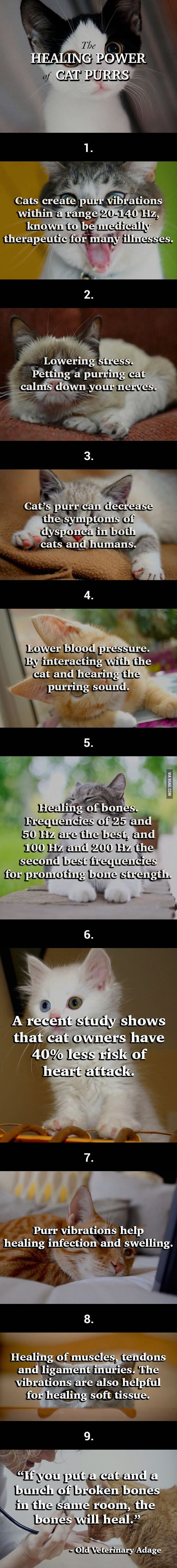 Trust Me! A Cat's Purr May Help You Live A Longer Life!