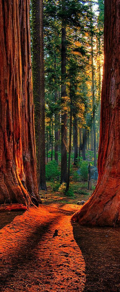 Sequoia National Park is a national park in the southern Sierra Nevada east of Vis