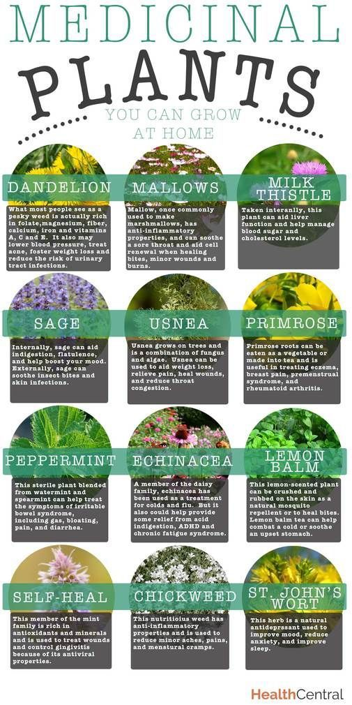 Medicinal Plants You Can Grow at Home It is time to start planning your garden. Th