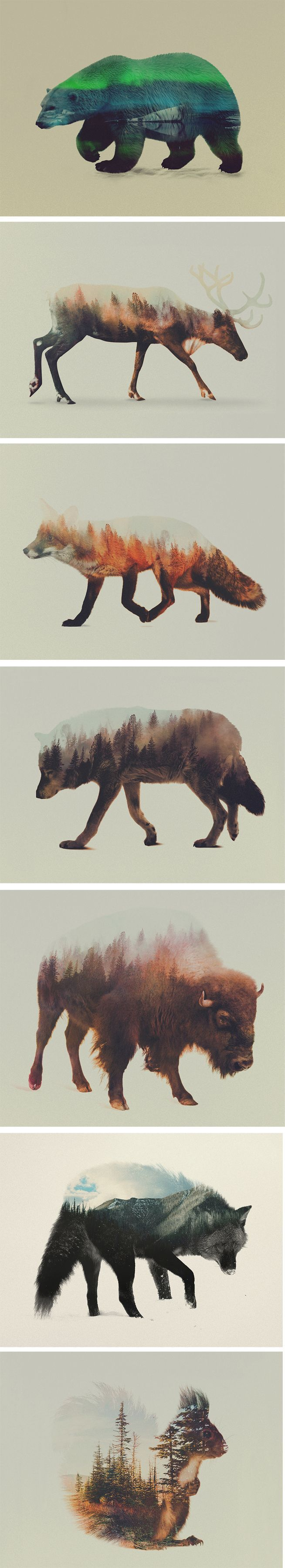Norwegian visual artist Andreas Lie merges verdant landscapes and photographs of animals to creates subtle double exposure