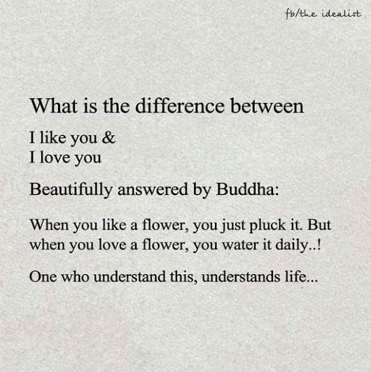 What is the difference between I like you & I love you Beautifully answered by Buddha When you like a flower, you just pluck it.