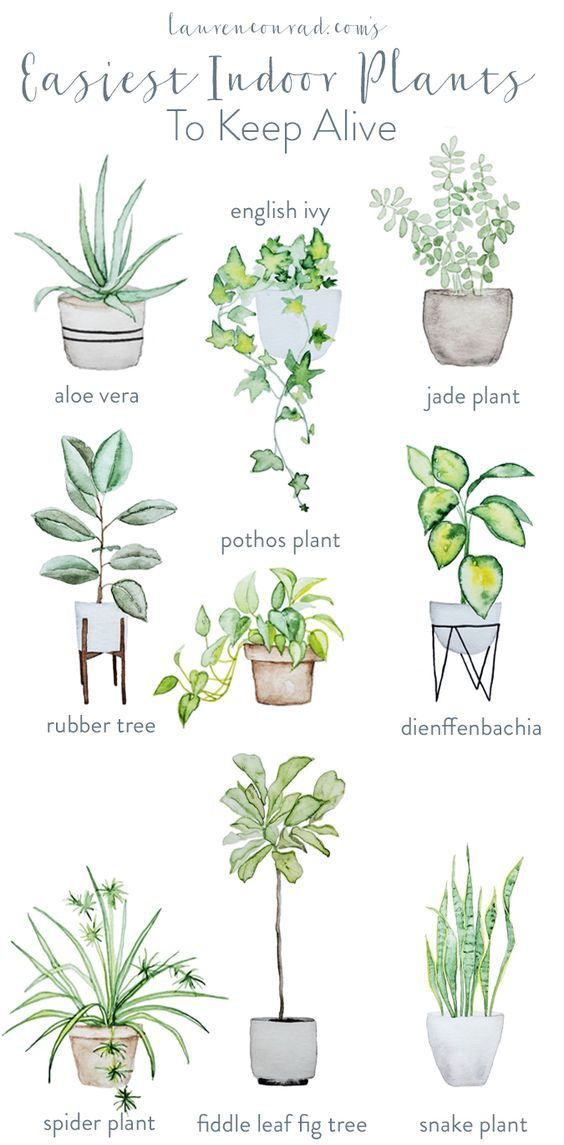 Indoor Plants | Home Styling Tips | Interior Cheat Sheet