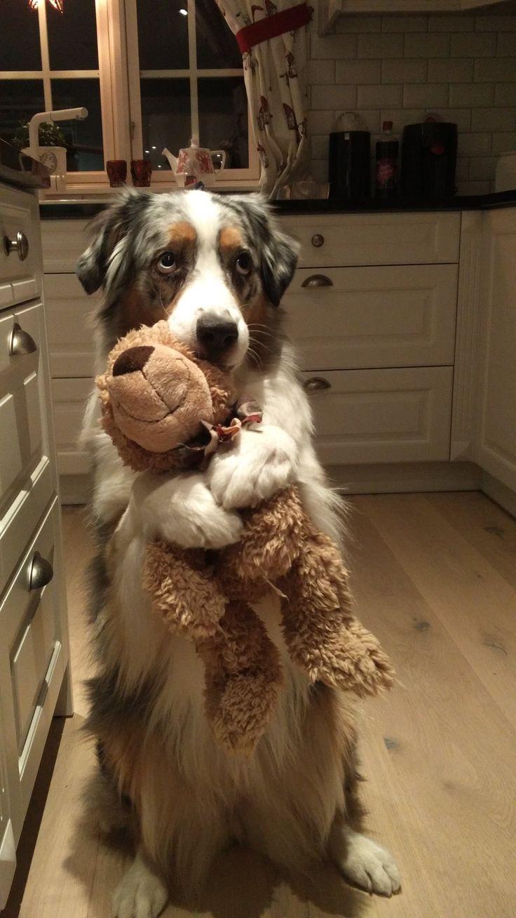 Dog hugging teddy