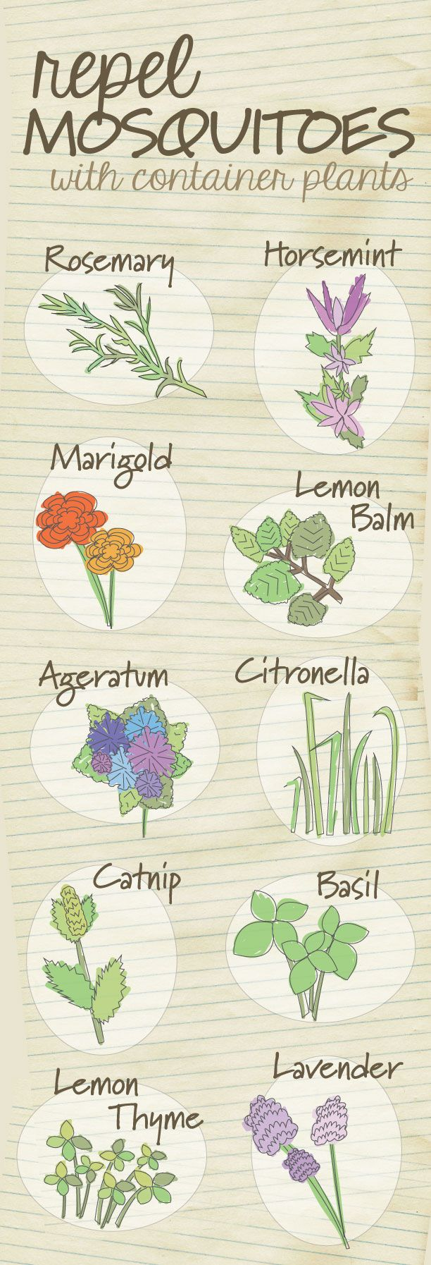 10 plants that help to repel mosquitoes