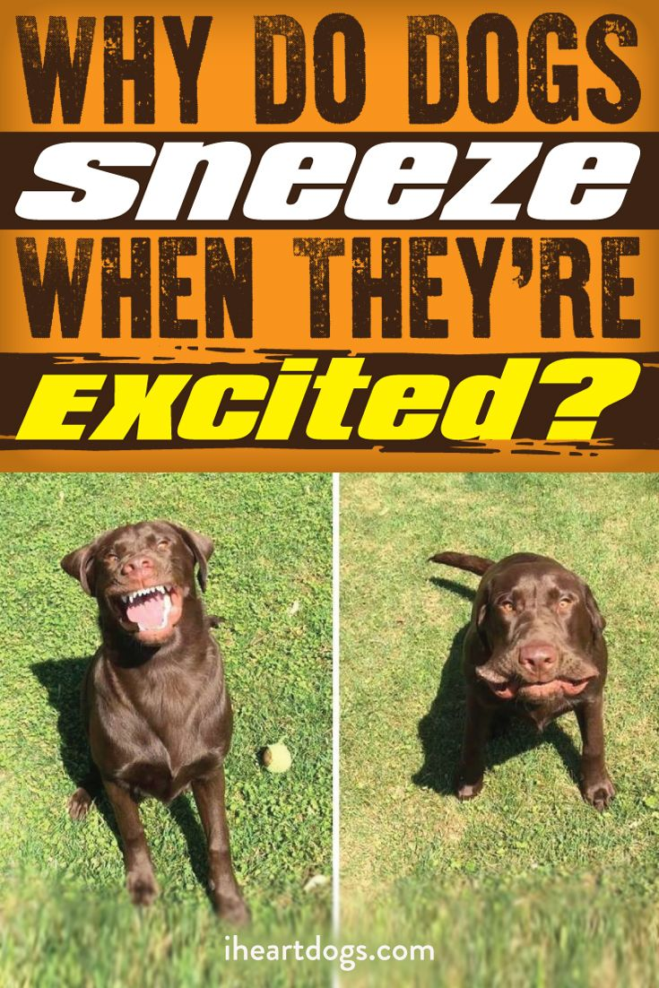 You could name your excited pup Sneezy!