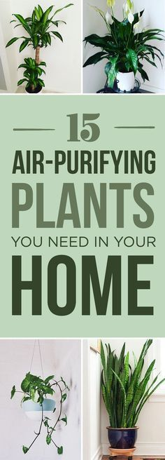 15 Beautiful House Plants That Can Actually Purify Your Home – Become a proud #plantparent. Andrew Richard / Via BuzzFeed They can