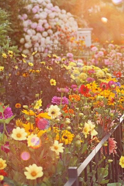 Farm Girl Studios: A Cutting Garden, plant an easy to reach flower garden just for taking cuttings