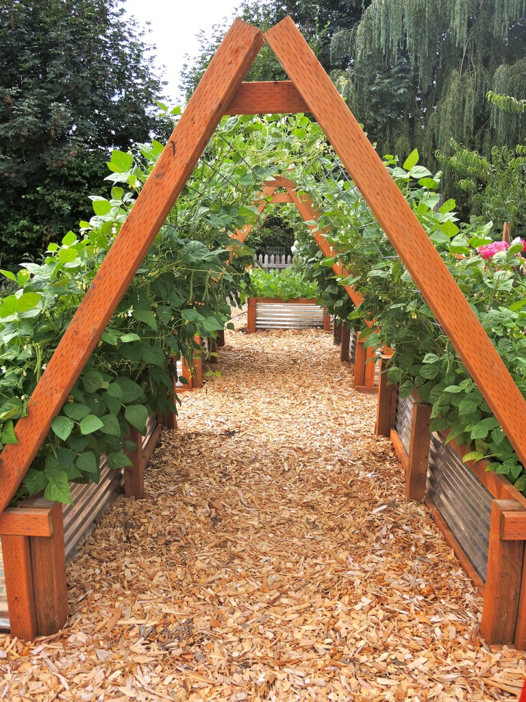 Beautiful vertical gardening/ This might work for cucumbers & other viney crops.