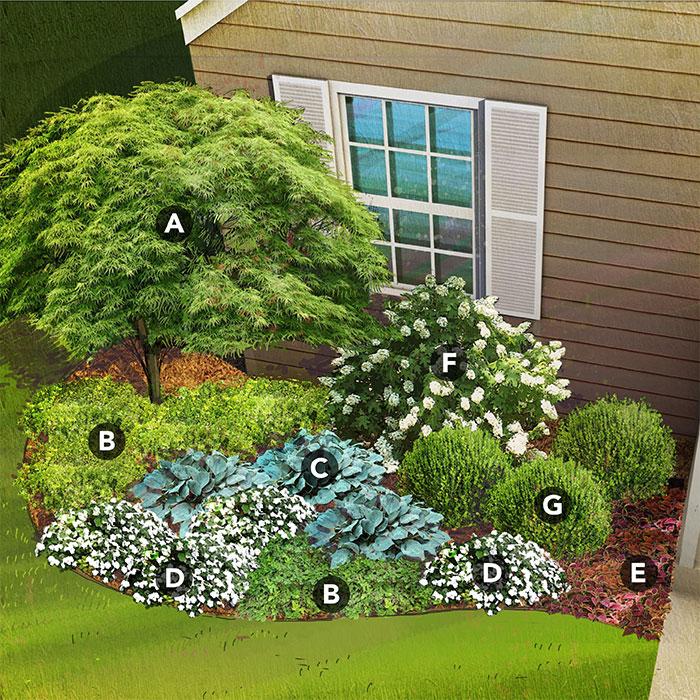 shade garden plan for south region featuring Japanese maple, mahonia, hosta, New Guinea impatiens, coleus, oakleaf hydrangea,