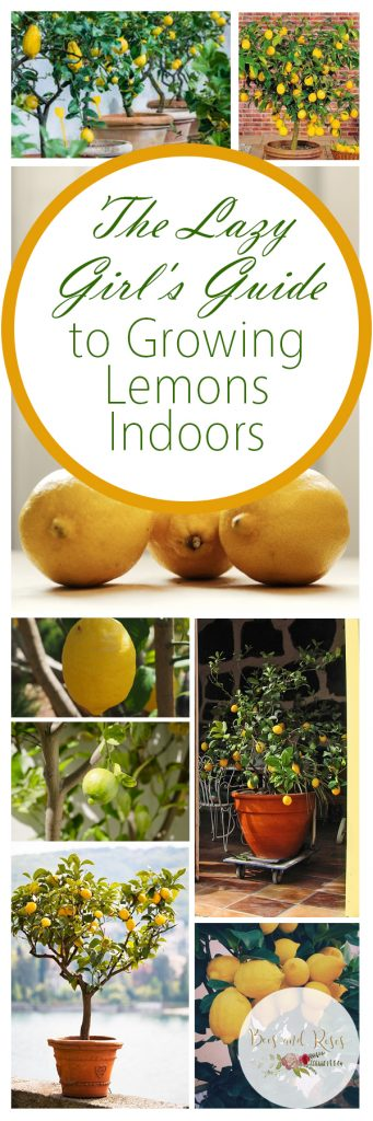 The Lazy Girl's Guide to Growing Lemons Indoors