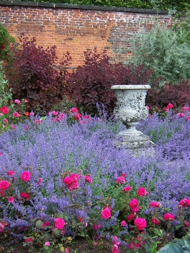Lavender and roses. Paul Simon has a song with that phrase . When you catch me with you eye. When you turn to me when your