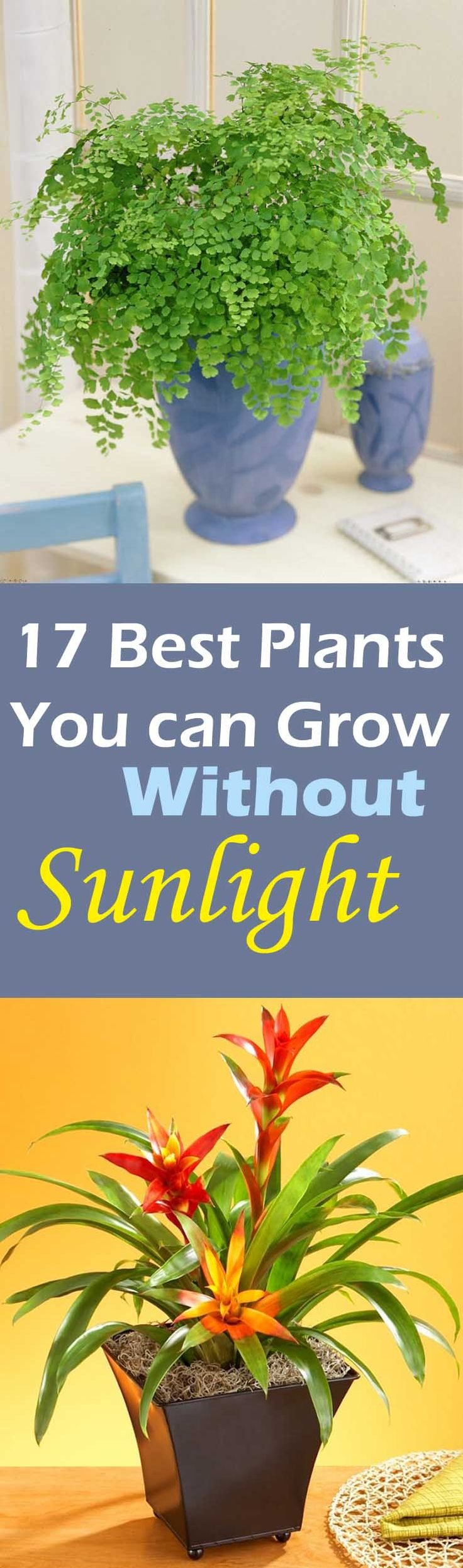 Do you have place in your house that don't receive direct sun or do you want to grow plants in your living room, dining room or
