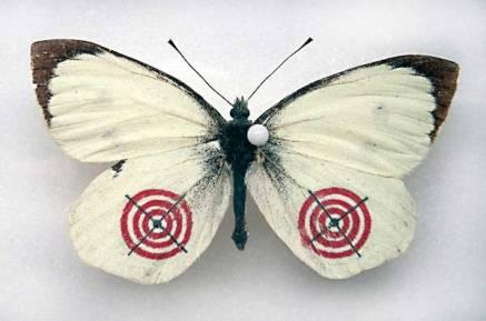 fluturi-3