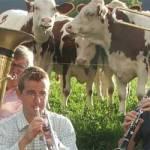 Jazz pentru vaci