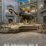 Vizitați virtual Banca Națională a României și Muzeul de Științe Naturale Smithsonian