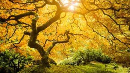Iubirea ca un copac