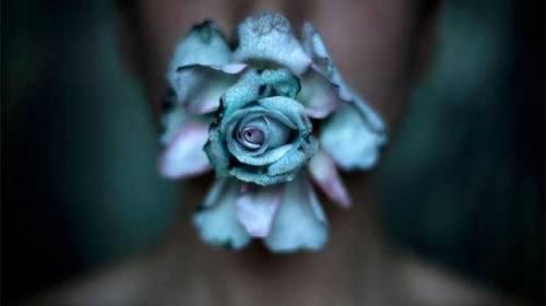Ultimele flori albastre