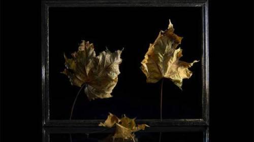 Sonetul frunzelor de-apoi