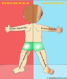 Lateralidad de espaldas: color