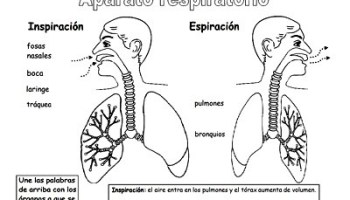 Higiene Del Aparato Digestivo Web Del Maestro