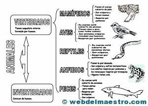 Animales vertebrados clasificación