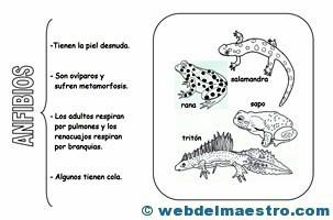 Animales vertebrados anfibios
