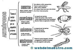 Animales invertebrados artrópodos