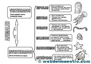 Animales invertebrados clasificación 1