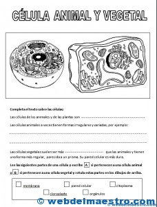 La célula animal y vegetal