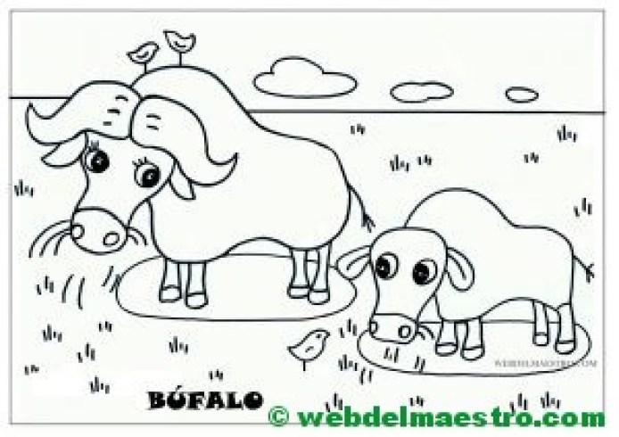 búfalo y cría