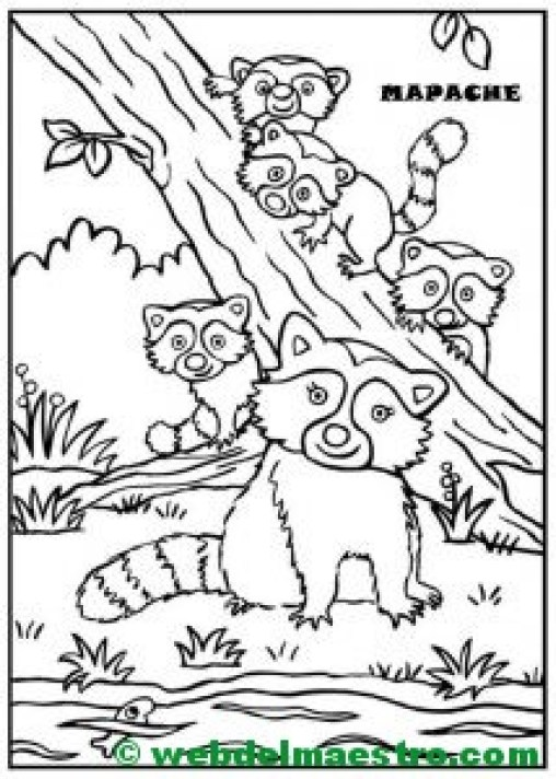 mapache y sus crías