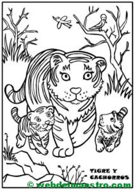 tigresa y cachorros