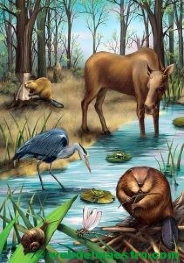 Animales de los ríos de América del Norte
