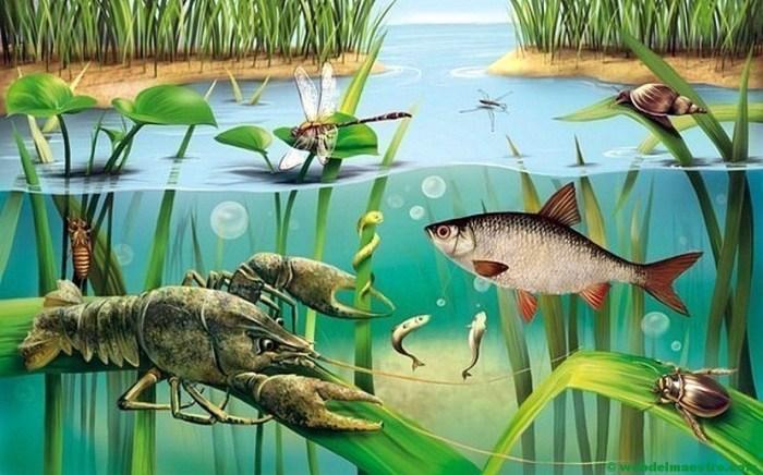 Animales de los ríos