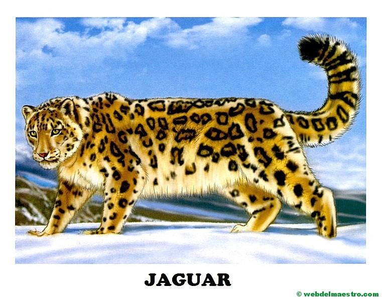 jaguar - Web del maestro