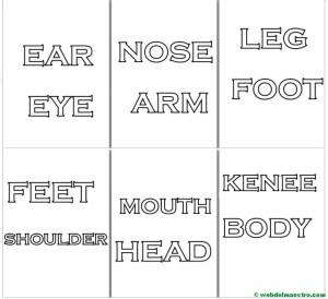 Rótulos de las partes del cuerpo en inglés