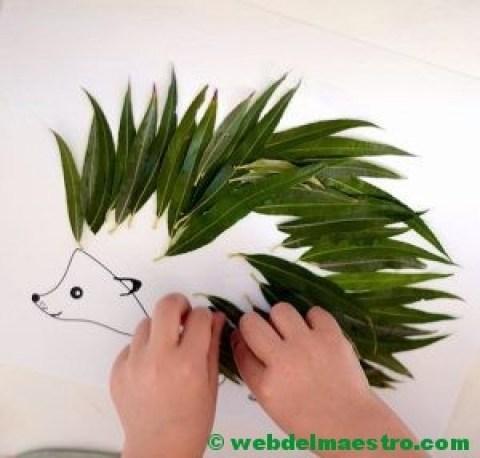 erizo con hojas lanceoladas
