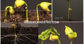Las plantas para niños-Cómo crecen las plantas