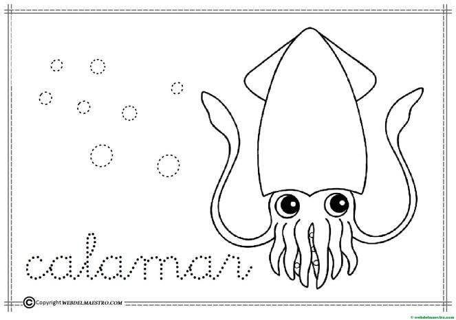 13-calamar