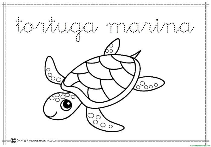 5-tortuga marina