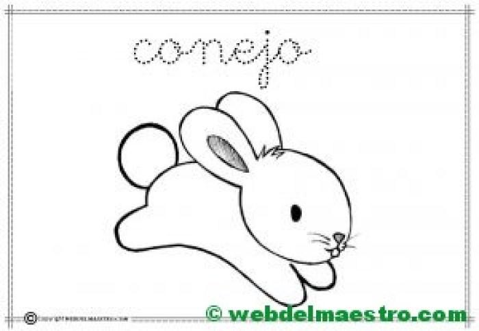 6-conejo