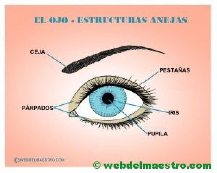 El ojo - Estructuras anejas - Cartel